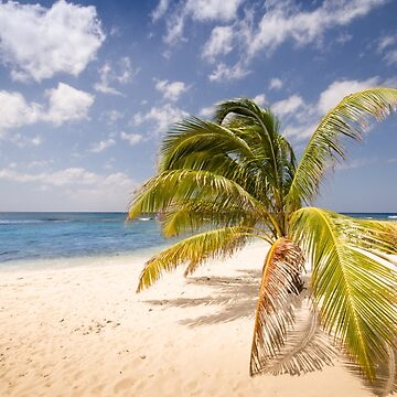 Perfect palm tree by bms-photo