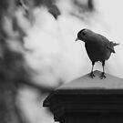 Bird b&w by Bahoke