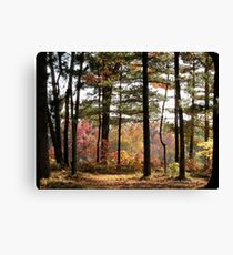 Autumn Forest in Wisconsin 1 of 2 Canvas Print
