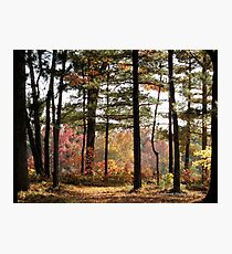 Autumn Forest in Wisconsin 1 of 2 Photographic Print