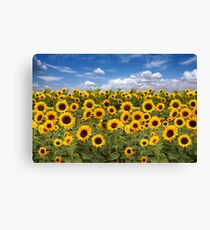 Sunflower Field With Heavenly Sky Canvas Print