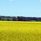 Canola & Country 2010 - 84 by Sharon Robertson