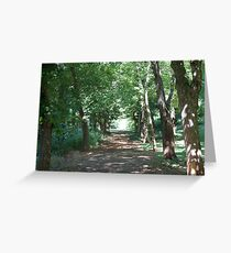 Forest pathway Greeting Card