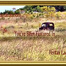Feature Banner by Sandra Moore