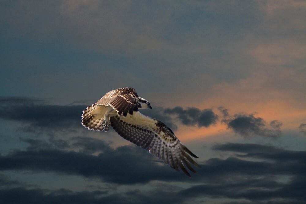 High Flying by byronbackyard
