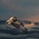 High Flying by byronbackyard