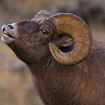 Big Horn Ram   #4645 by JLWoody15Wooden