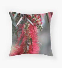 Aussie Bottlebrush Flower Throw Pillow
