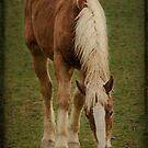 Horse with no name by Jean-Pierre Ducondi