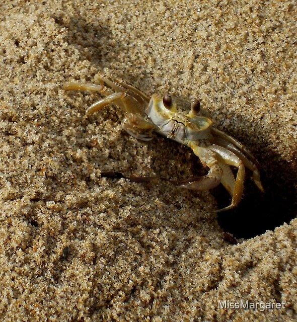 Sand Crab by MissMargaret
