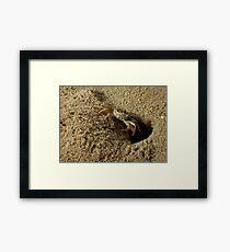 Sand Crab Framed Print