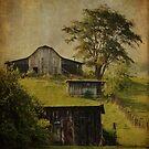 Blue Ridge Barns by Jean-Pierre Ducondi