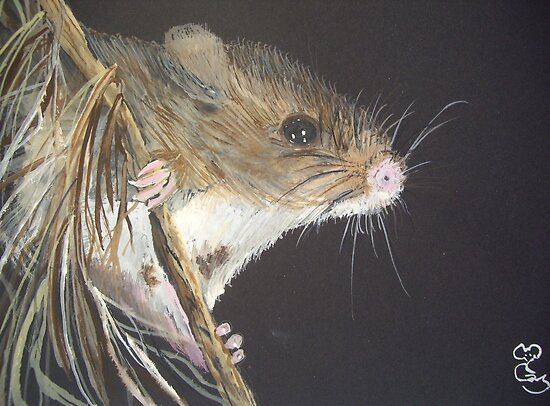 Anne's Mouse by Carole Robins