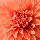 Peachy Pink by Jeri Garner
