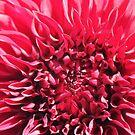 Dahlias In Bloom by Jeri Garner