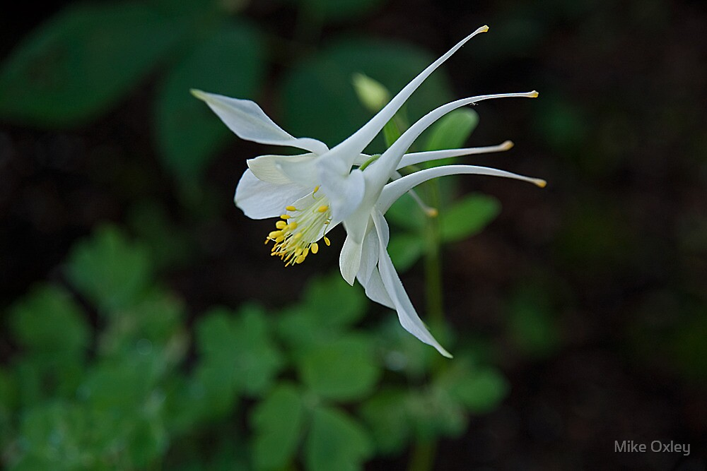 Columbine by Mike Oxley