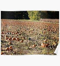 The Pumpkin Patch Nearby - Rhode Island - US Poster
