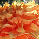 Peach Petals by Jeri Garner