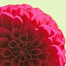 Red Velvet by Jeri Garner