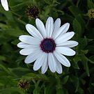 Soprano White by photosbycoleen