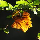 A Lyric of Autumn by Alison M