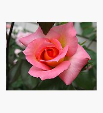 Hick Kicking Rose Photographic Print