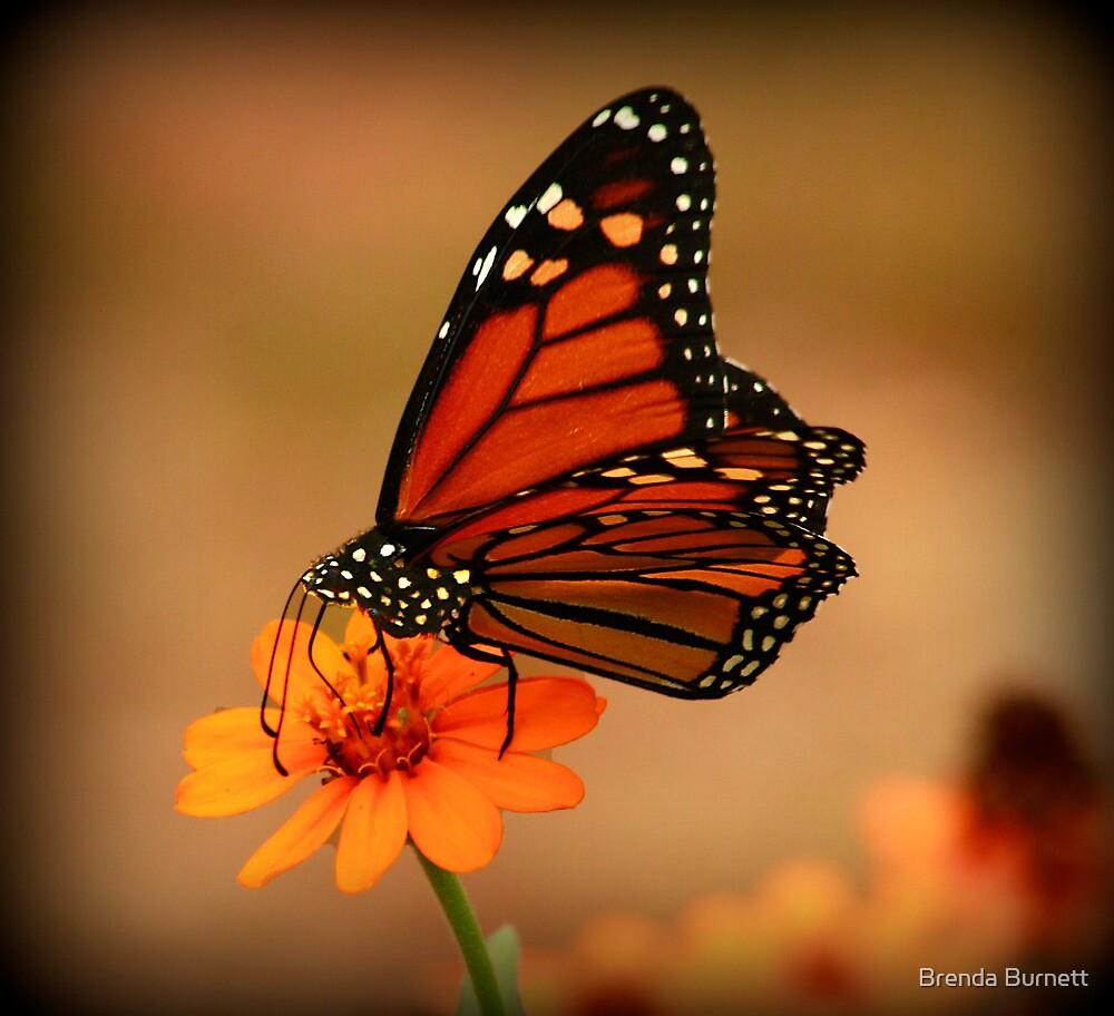 Monarch Beauty by Brenda Burnett