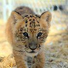 Tiger cub by Srinivas Dommety