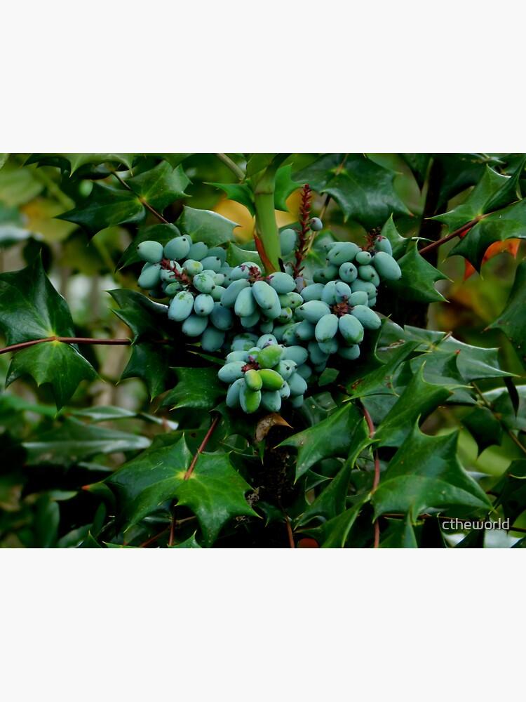 Wild Berries by ctheworld