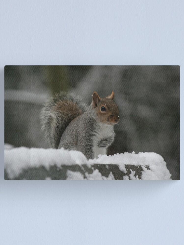 Alternate view of Squirrel 7 Canvas Print