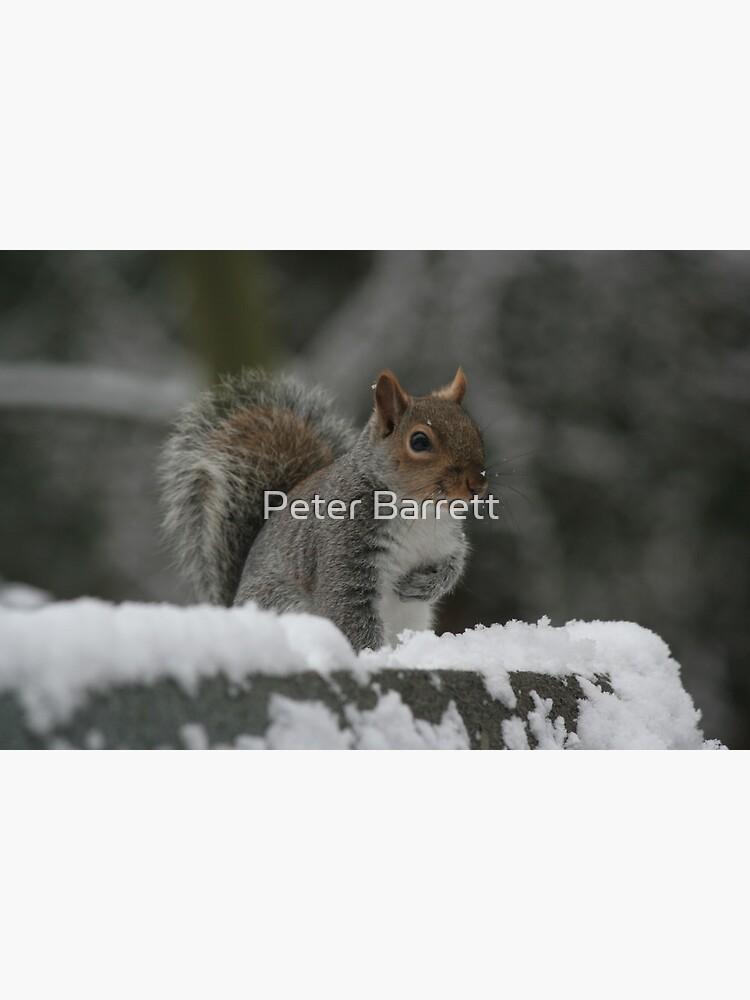 Squirrel 7 by hartrockets