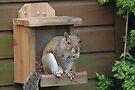 Squirrel 8 by Peter Barrett
