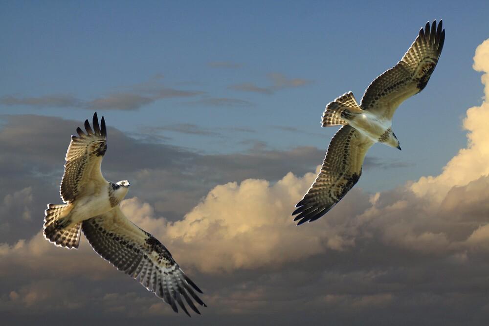 Fledgling Duo by byronbackyard