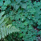 Shamrocks,Fern, white blooms by Linda Scott