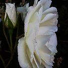 Finest White by Dawn B Davies-McIninch