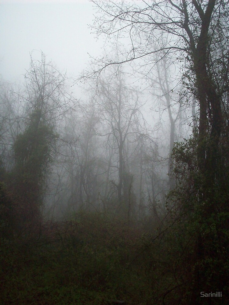 Misty Forest by Sarinilli