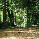 Autumn Path by Liam O'Brien