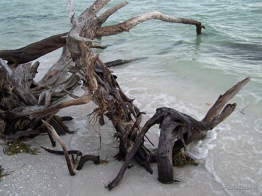 Driftwood by Paula Bobish