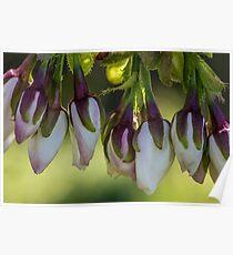 Macro Blossom Flowers Poster