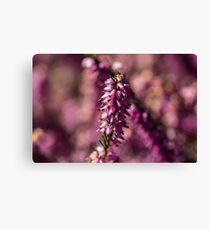 Macro Heather Plant Canvas Print