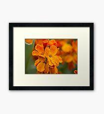 Macro Orange Flowers Framed Print