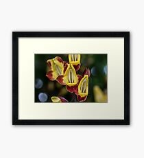 Macro Red and Yellow Flowers Framed Print