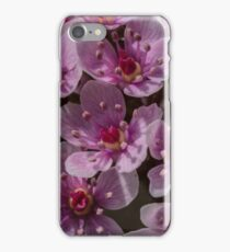 Macro Umbrella Plant iPhone Case/Skin