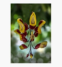 Red and Yellow Flowers Photographic Print