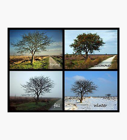 Tree and Seasons Change Photographic Print