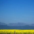 Blue skies and buttery fields by Karen01