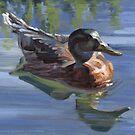 Mallard Hen 2 by laillustrator