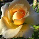 Autumn Rose. by Vitta
