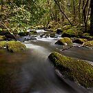 Hidden Creek Beauty by Kylie  Sheahen