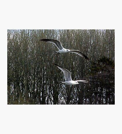 Formation Flying Photographic Print